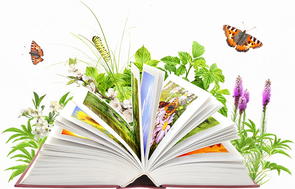 Book with butterfly images